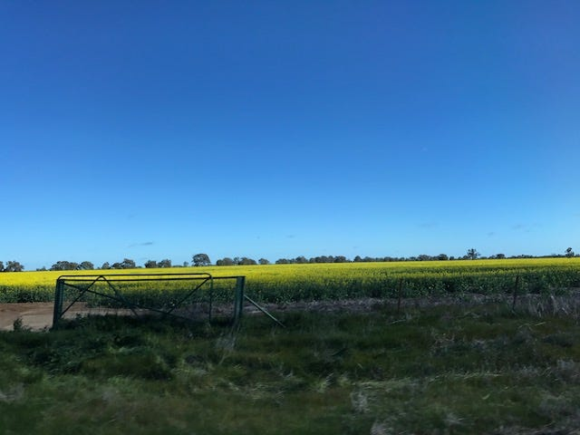 So. Much. Canola.